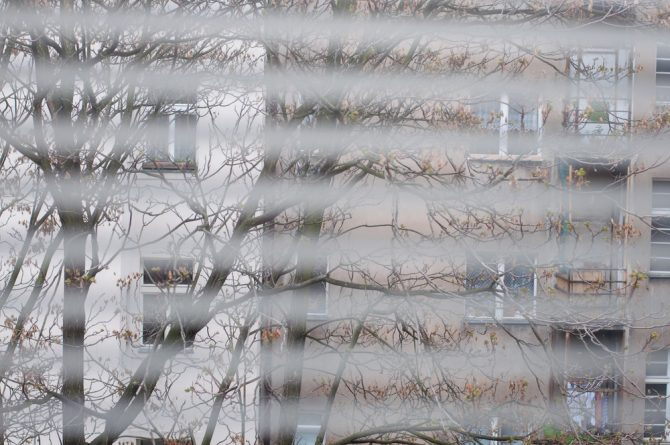 An image of some trees seen through some blinded windows